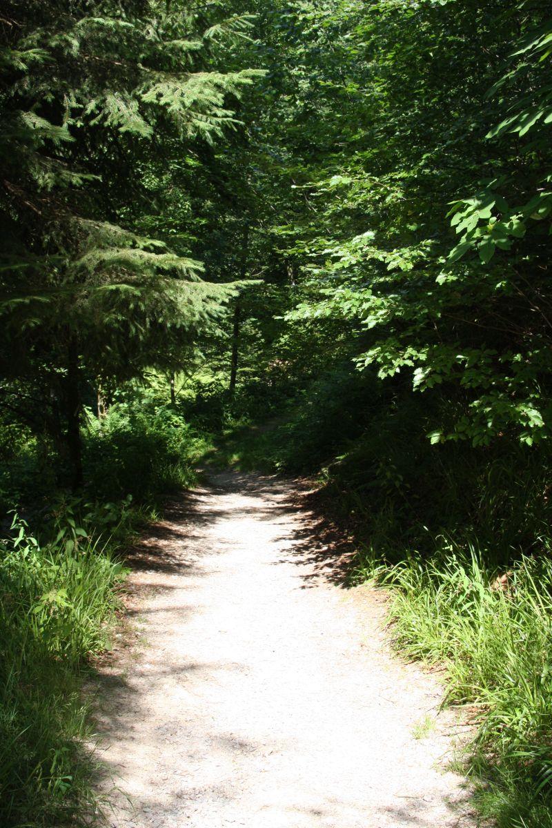 Wanderweg bei den Allerheiligen Wasserfaellen im Schwarzwald