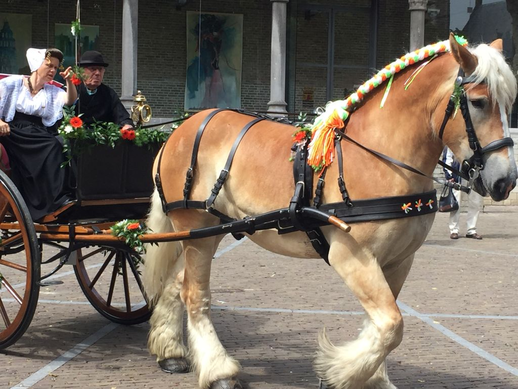 Ringstecher (Sjeezenrijder in ihrer Kutsche mit geschmuecktem Zugpferd