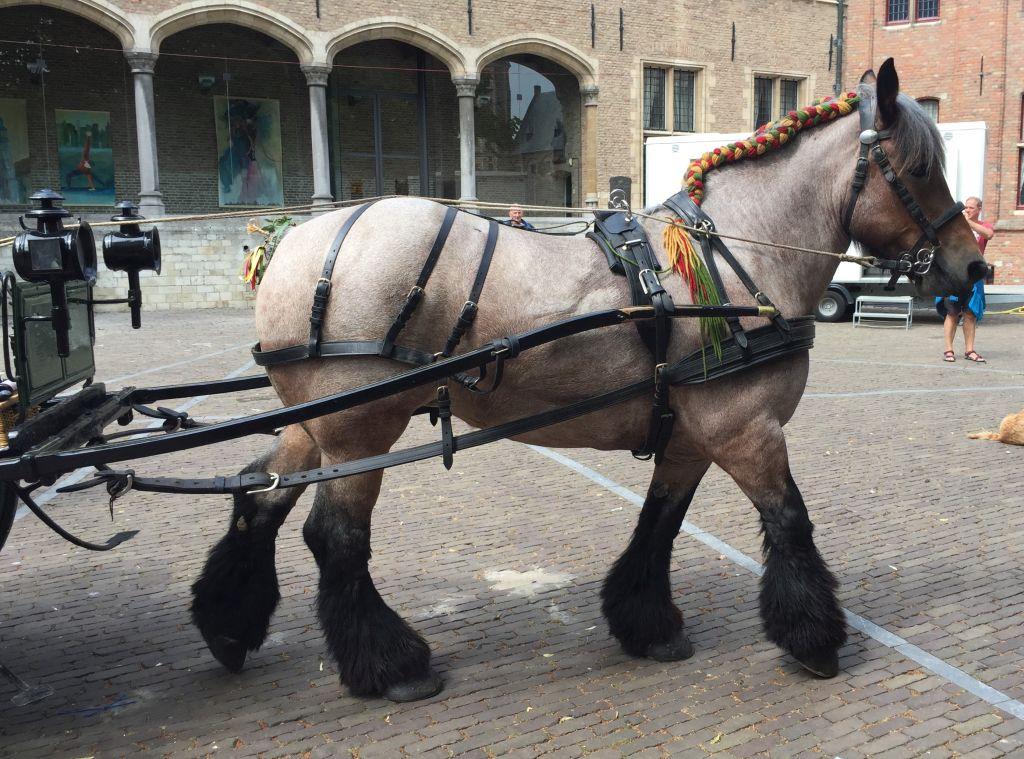 Zugpferd mit bunt geknuepfter Maehne vor seiner Kutsche beim folkloristischen Tag in Mittelburg