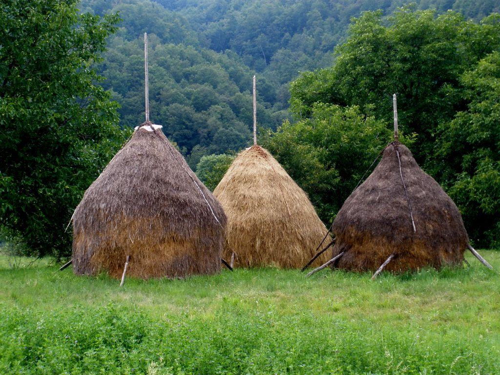 Drei typische, von Hand aufgeschichtete Heuhaufen in Rumaenien