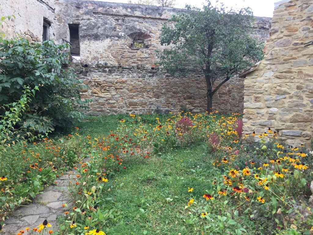 Wildblumen im Kirchhof der Kirchenburg von Kleinschenk / Cincsor, Siebenbuergen