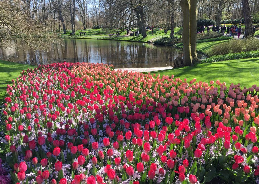 Tulpenwiese mit See im Keukenhof bei Amsterdam