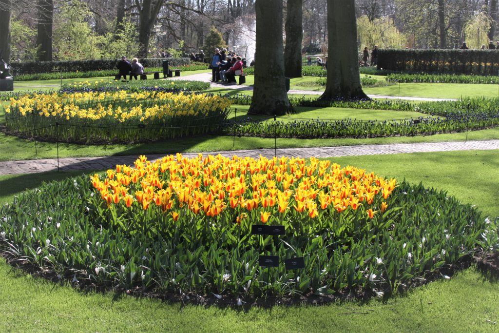gelbbluehendes Tulpen- und Osterglockenfeld im Keukenhof