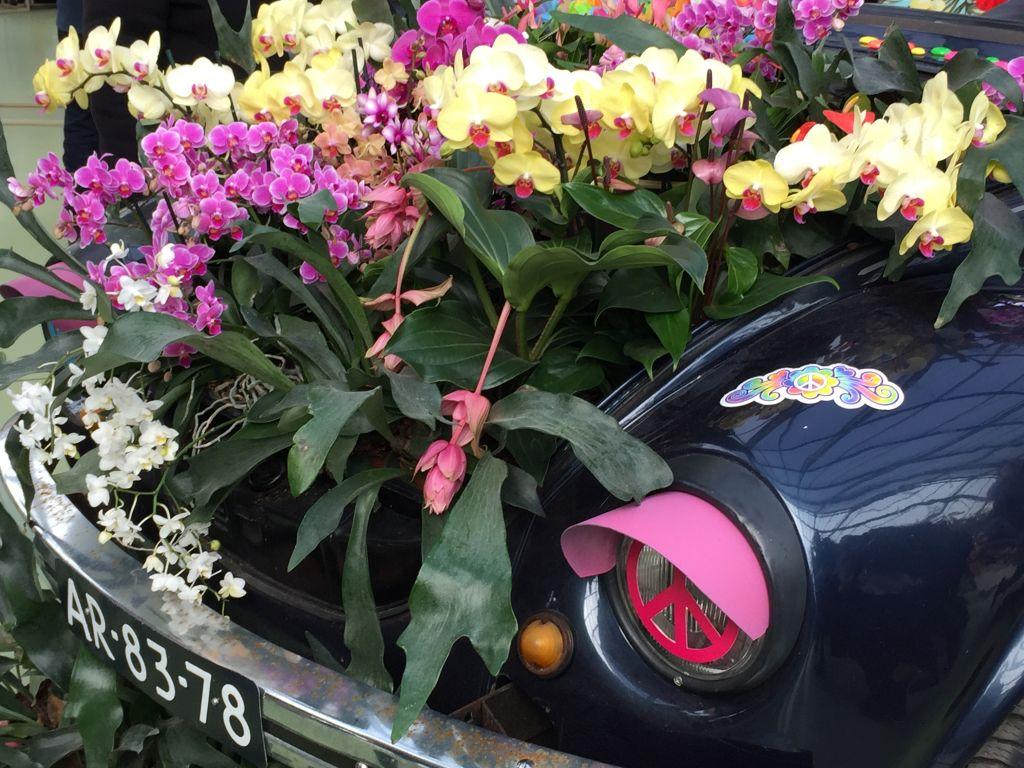 Orchideen in der Motorhaube eines VW Kaefers
