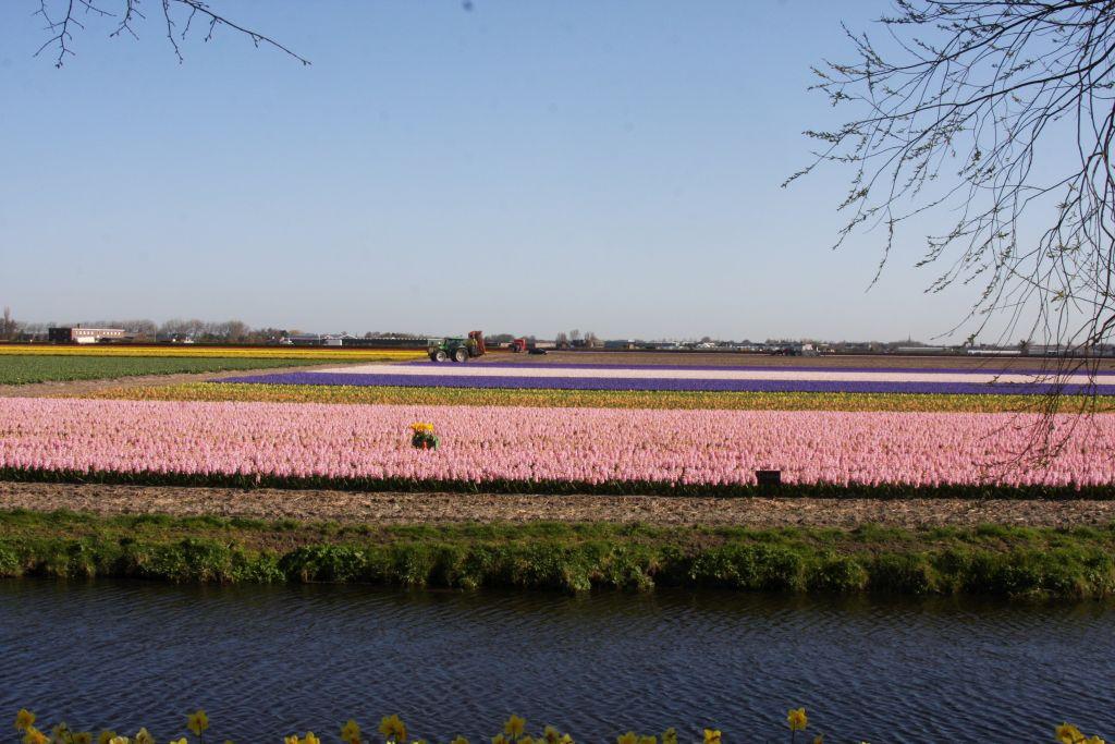 bunte Blumenfelder bei Lisse