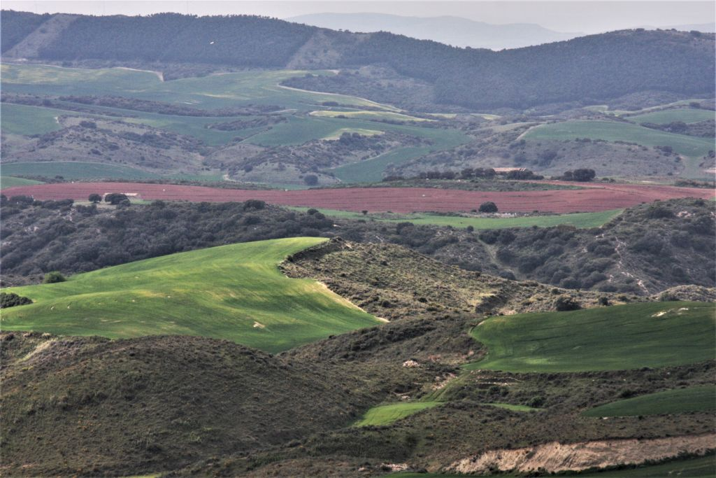 huegelige Landschaft bei Obanos, Navarra