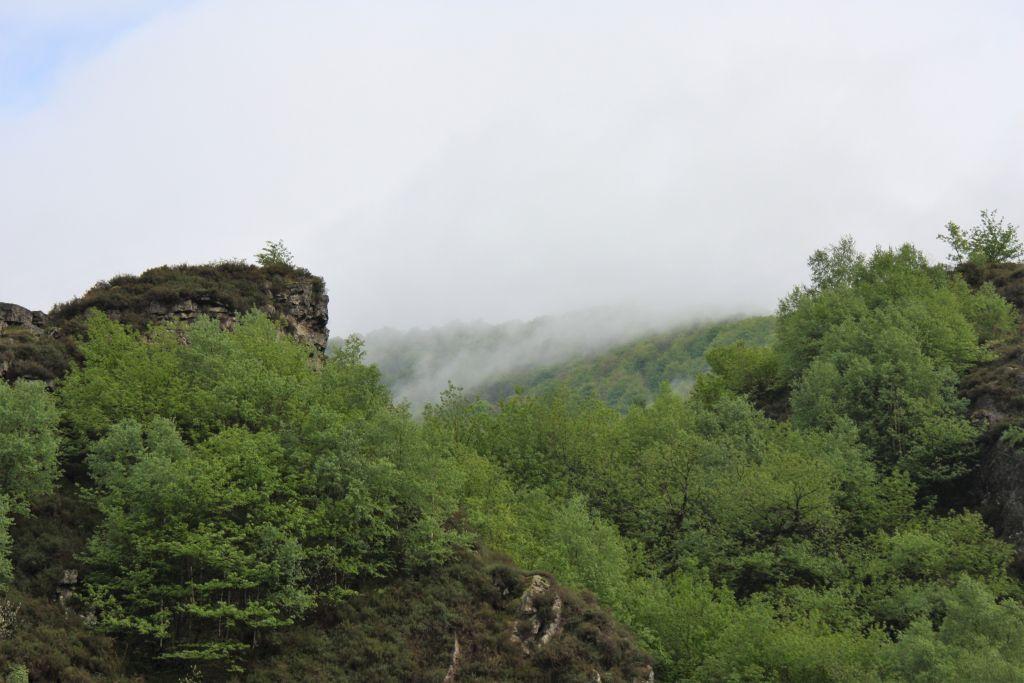 bewaldete Ibaneta-Passhohe in den spanischen Pyrenaeen