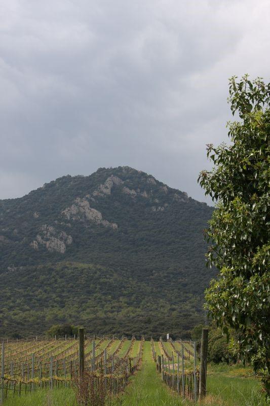 Weinstoecke vor dem Berg Montejurra