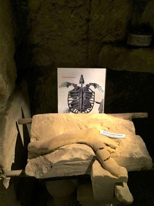 Schulterknochen einer Ur-Schildkroete, der in der Fluweelengrotte in Valkenburg gefunden wurde.