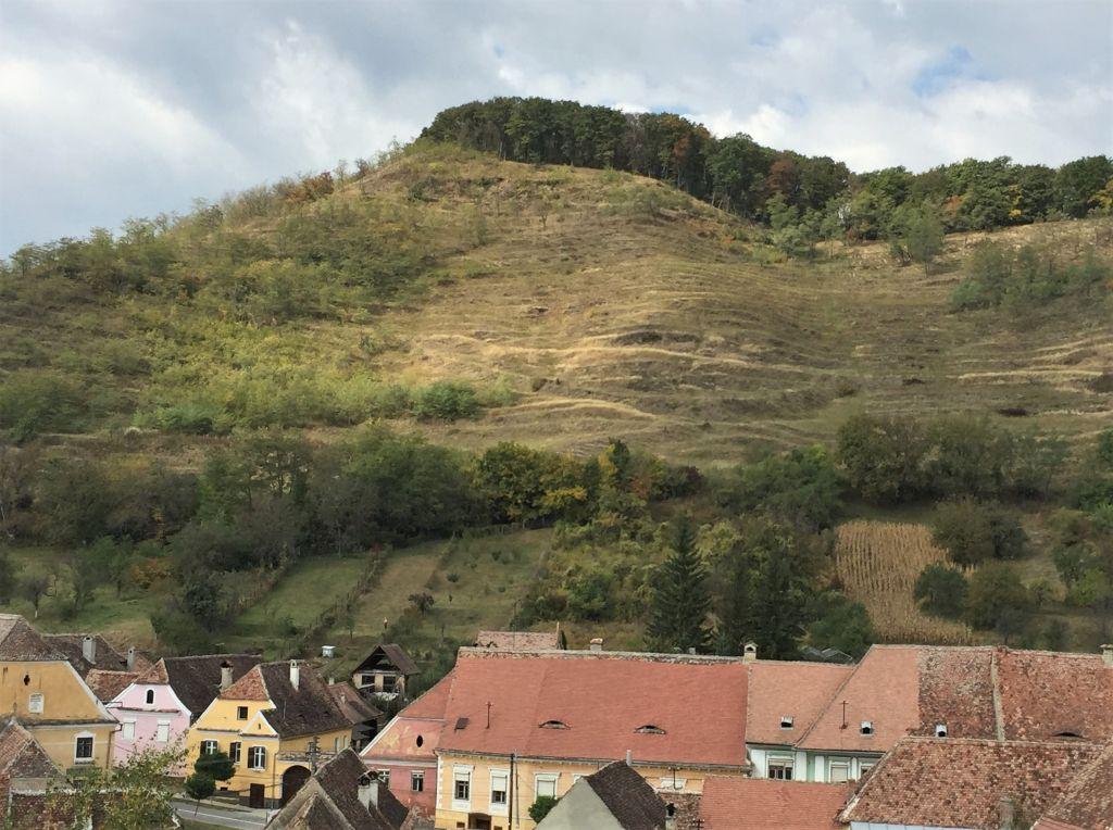 vernachlaessigte Weinterrassen bei Birthaelm / Biertan in Siebenbuergen