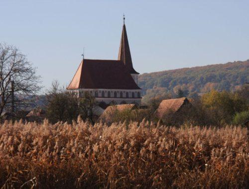 Blick über ein Schilfrohrfeld auf die Kirchenburg von Klosdorf / Cloaşterf in Siebenbuergen