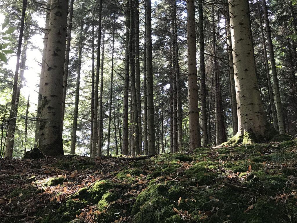 Wald im Grobbachtal im Nordschwarzwald