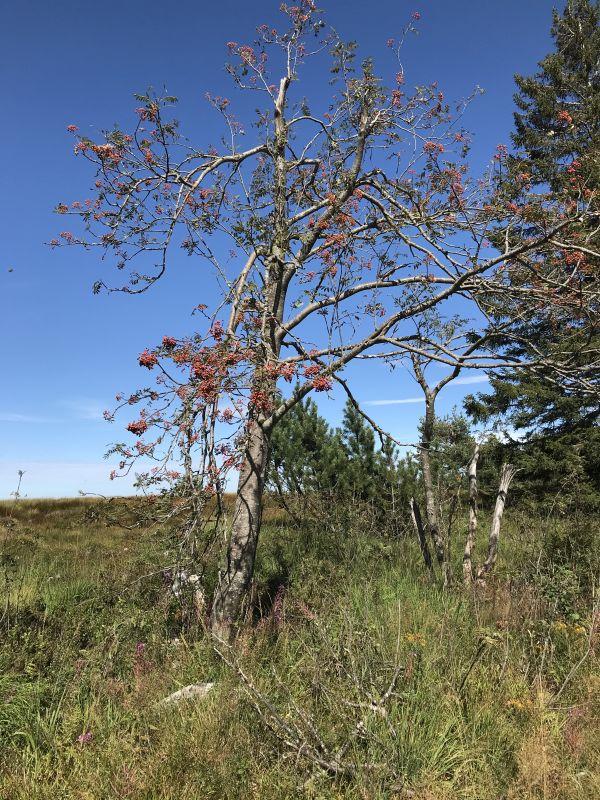 Naturlandschaft auf der Hornisgrinde