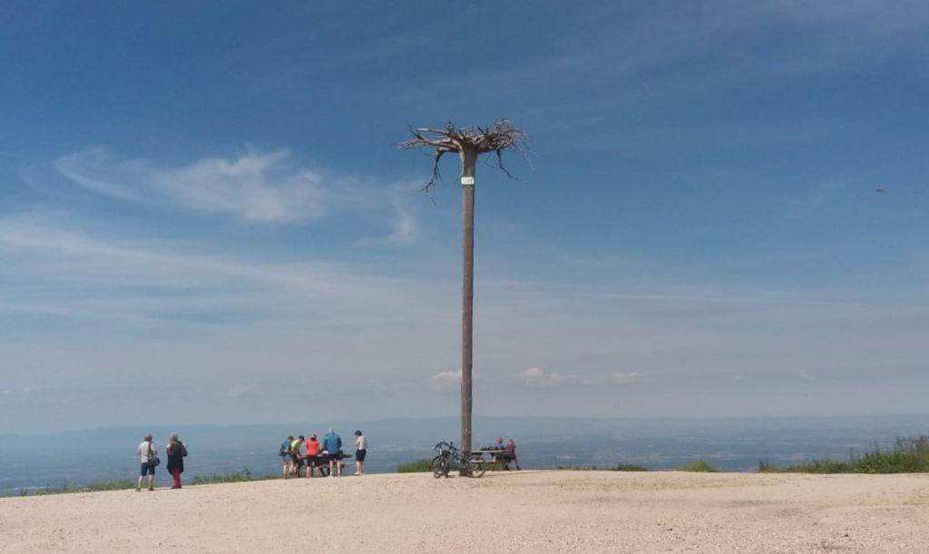 Hornisgrinde-Plateau mit einem auf dem Kopf stehendem Baumstamm