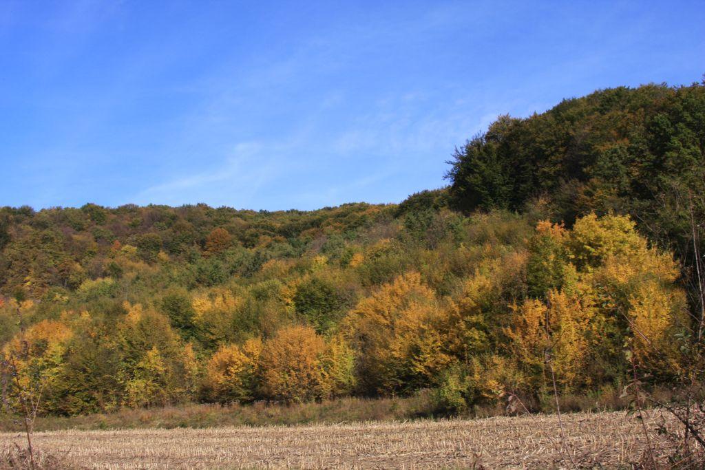 Herbstwald im Tal der Großen Kokel in Siebenbuergen