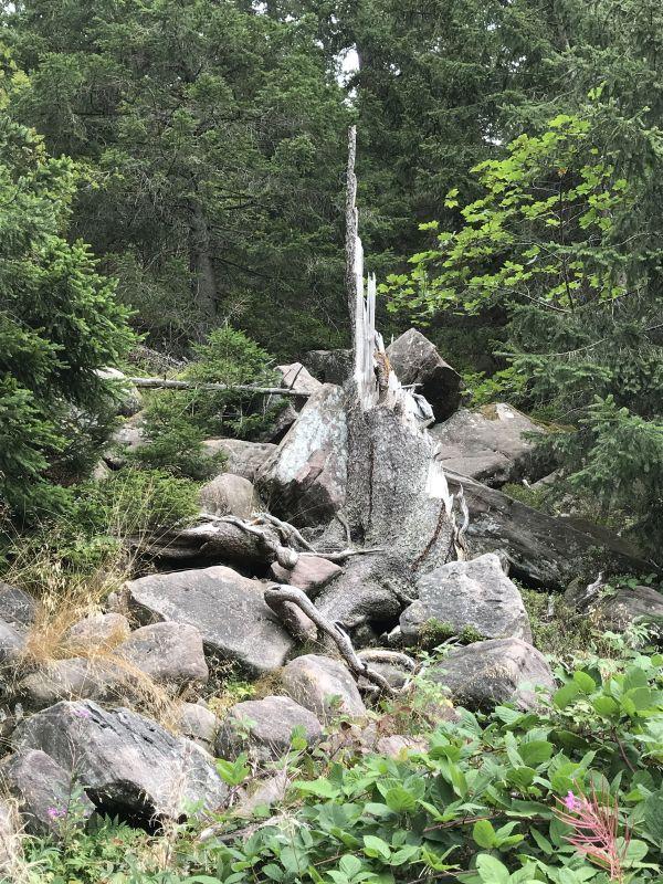Geroellbrocken umgeben von dichtem Wald am Mummelsee