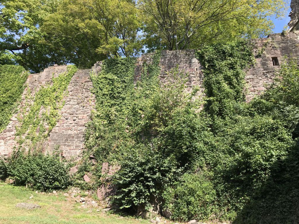 Torzwinger mit Ringmauer der Ruine Yburg