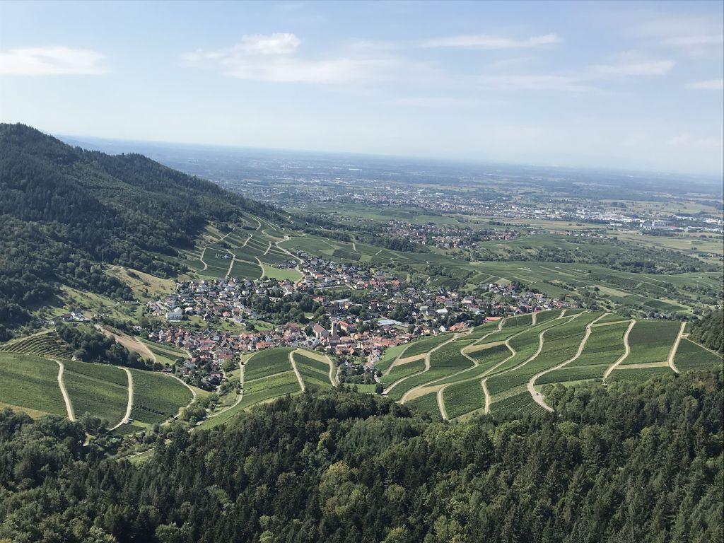 Blick vom Yberg ins Rebland bei Baden-Baden