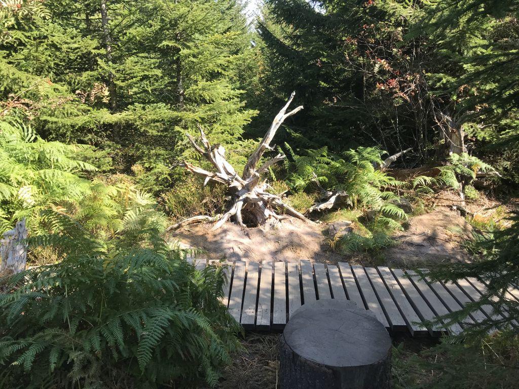 Blick in die Wildnis des Lotharpfads