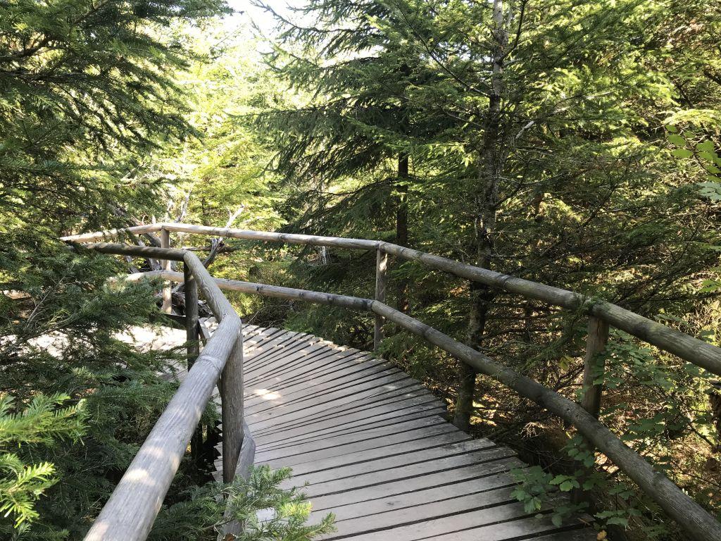 Holzbohlenweg Lotharpfad im Nordschwarzwald