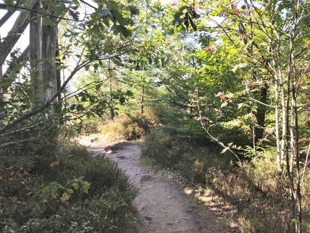 Waldweg beim Lotharpfad