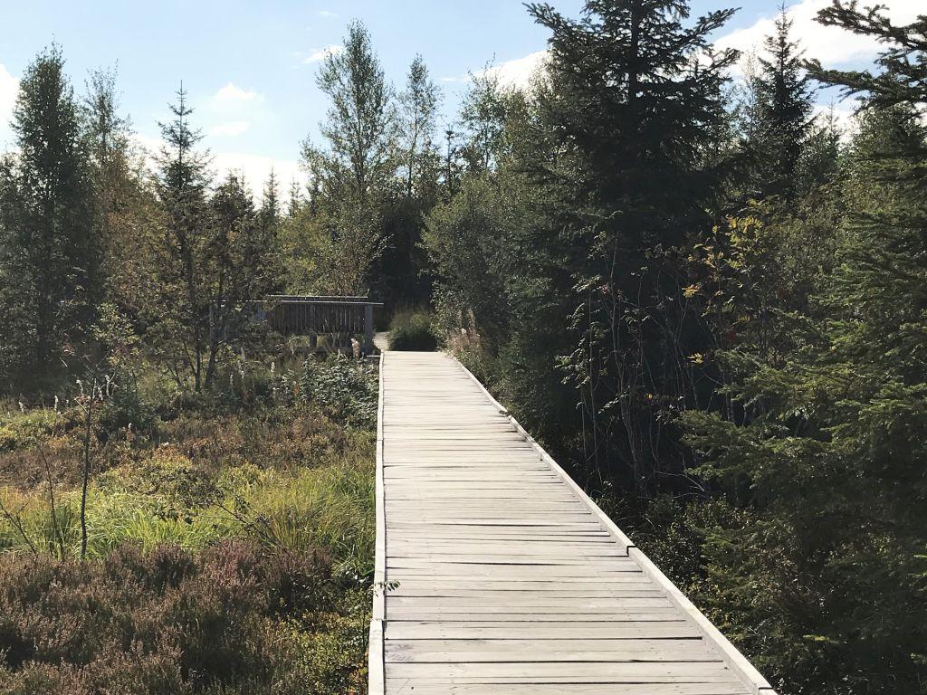 Holzbohlenweg durch den Lotharpfad