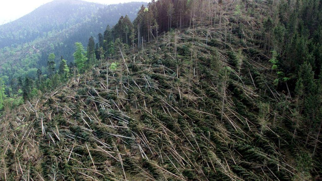 Archivbild Waldschaden im Schwarzwald durch das Orkantief Lothar 1999