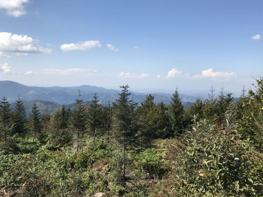 Blick vom Aussichtsturm am Lotharpfad über den Nordschwarzwald