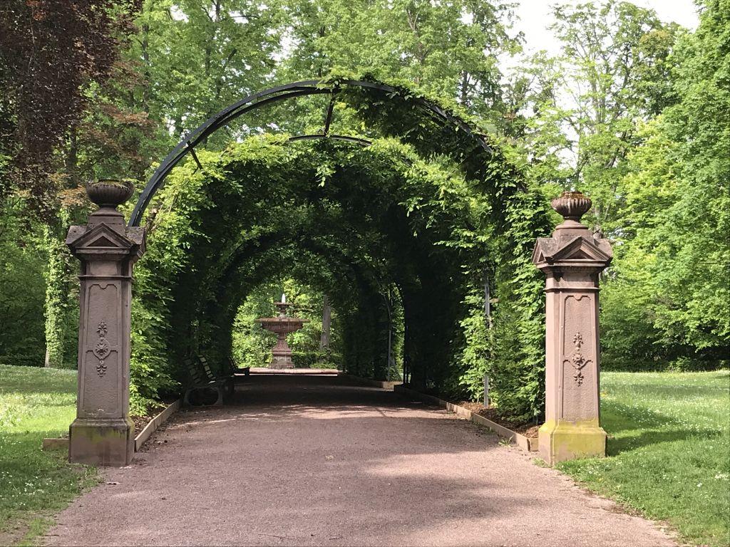 Hainbuchen-Laubengang im Parc de l'Orangerie in Strasbourg