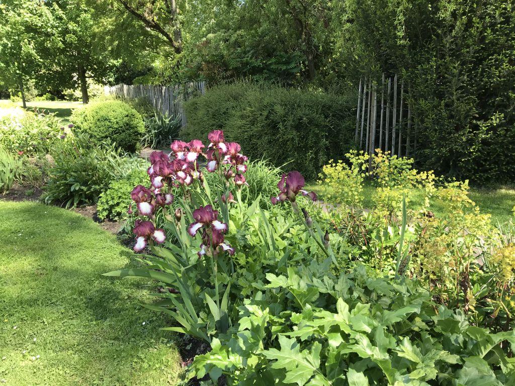 Wasser lilien im Parc de l'Orangerie in Strassburg