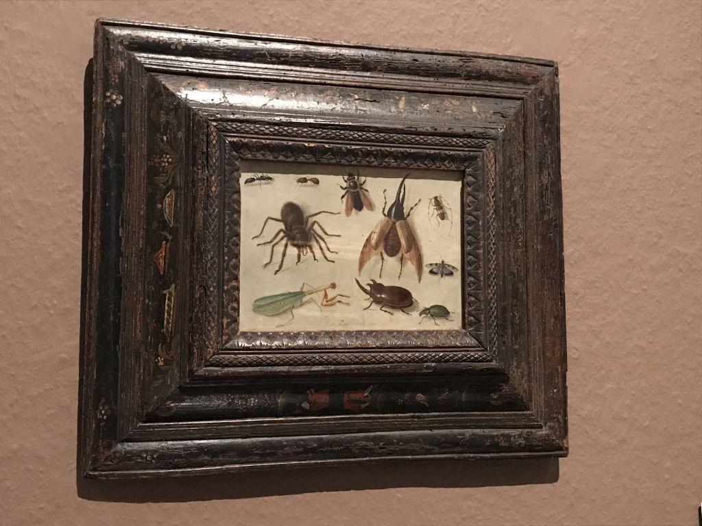 Insekten und Spinne, Gemaelde von Jna van Kessel der Aeltere im Museum der Bildenden Kunst in Strassburg